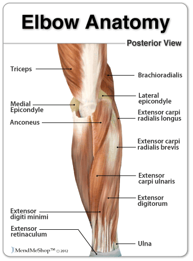 Lateral and Medial Epicondyle Location
